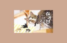 画像:【532号】保護猫とのハッピーライフ