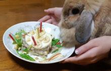 画像:ウサギも食べられるバースデーケーキ