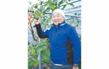 画像:【564号】すてきびと – 熱帯果樹栽培管理者 諫山 敬さん