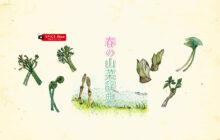 画像:【566号】すぱいすフォーカス – 春の山菜辞典
