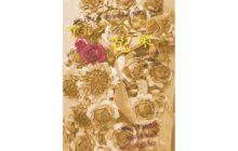 画像:【574号】カルチャールーム – 劇団「石」50周年記念公演(復興を願って) アルジャーノンに花束を